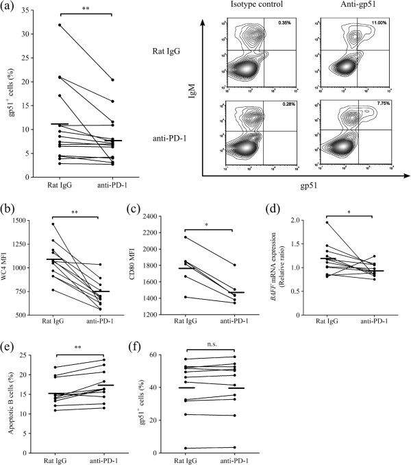 Effect of PD-1 blockade on gp51 expression and B-cell activation. (a , b, c) Percentages of gp51-expressing cells ( a ; n = 15) and mean fluorescence index (MFI) of WC4 (CD19 like molecule) ( b ; n = 12) and CD80 ( c ; n = 6) in IgM + B cells were evaluated by flow cytometry in PBMC treated with rat IgG control or anti-PD-1 mAb (20 μg/mL). Representative contour plots showing gp51 expression (right panels) in PBMC treated with rat IgG control (upper panels) or anti-PD-1 mAb (lower panels) is shown in (a) . No staining was observed in PBMC stained with isotype control for anti-gp51 mAb (left panels). (d) Expression of BAFF mRNA was evaluated by real-time PCR ( n = 12). The results are indicated as relative change to control (no antibody treatment) when the amount of BAFF mRNA expression is divided by GAPDH mRNA expression. (e) Percentages of apoptotic cells in IgM + B cells were measured by flow cytometry. Apoptotic B cells were identified as annexin-V + 7-AAD - cells ( n = 11). (f) Percentages of gp51-expressing cells were evaluated by flow cytometry in isolated B cells cultivated with rat IgG control or anti-PD-1 mAb ( n = 11). Statistical comparisons between rat IgG control and anti-PD-1 mAb were made using the Wilcoxon matched-pairs test. Differences were considered statistically significant at P