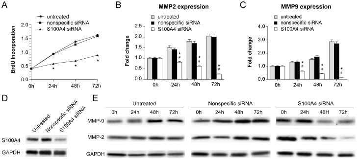 Down-regulation of S100A4 inhibited cell proliferation of A7r5 and MMP2/MMP9 expression in vitro . A, The results of cell proliferation ability of A7r5 cells after transfection with S100A4 siRNA at different time intervals (0, 24, 48, 72 h). *Represents P