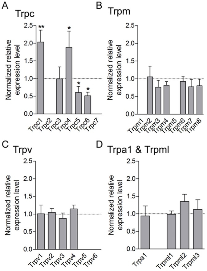 TRP expression screening in DRG of CYPc rats. A–D, qRT-PCR analysis of Trpc ( A ), Trpm ( B ), Trpv ( C ), and Trpa1 and Trpml ( D ) mRNA shows an up-regulation of Trpc1 and Trpc4 transcripts and a decreased expression of Trpc5 and Trpc6 transcripts in L6-S1 DRG of CYP-treated rats.