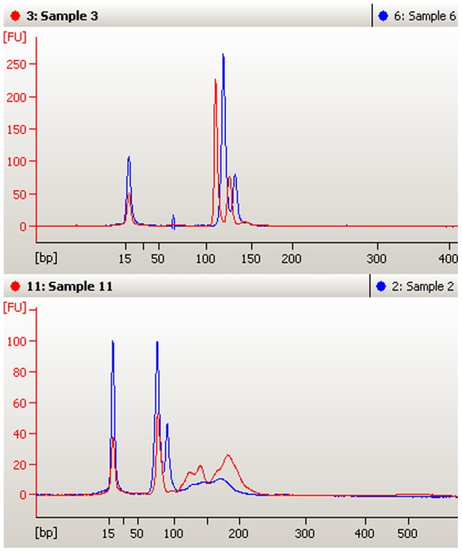 Comparison of amplification results of DNA extracted from hair shafts using the proposed method and that extracted from liver using commercial Genomic DNA Purification Kit (on-chip-electrophoresis results). The above panel is INRA035 comparison result, sample 6 is amplification result of hair shaft DNA from pure bred Luxi cattle and sample 3 is amplification result of liver DNA from beef cattle; The below panel is CSRM60 comparison result, sample 2 is amplification result of hair shaft DNA from pure bred Luxi cattle and sample 11 is amplification result of liver DNA from beef cattle.
