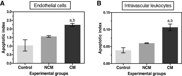 Quantification of cleaved caspase-3 in vascular ECs and intravascular leukocytes in the brain of control, NCM and CM groups. Data were analysed as apoptotic index in the vascular ECs (A) and intravascular leukocytes (B) . a Significance of p