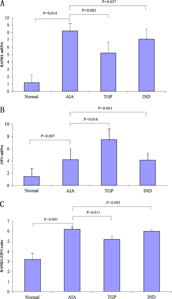 TGP treatment decreases RANKL expression and increases OPG expression. (A) RANKL mRNA and (B) OPG mRNA expression in each experimental group. (C) RANKL/OPG ratio. Results are presented as mean ± S.D.