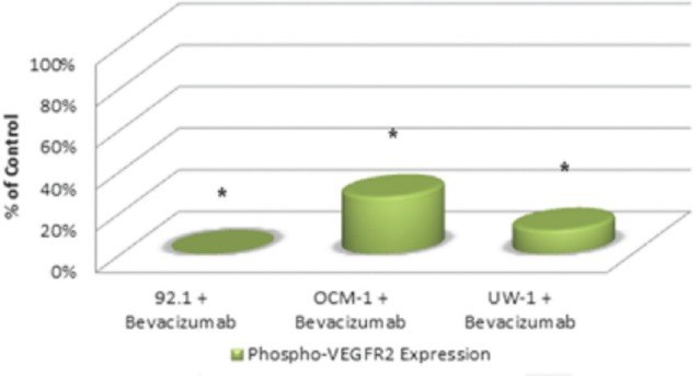 Figure 3: Phosphorylated VEGF-R2 expression in three UM cell lines following bevacizumab treatment as determined by western blot. Expression of phosphorylated-VEGF-R2 before and after bevacizumab treatment is expressed as a percentage of the control. The OD of the western blots was quantified using ImageJ software (NIH). * P