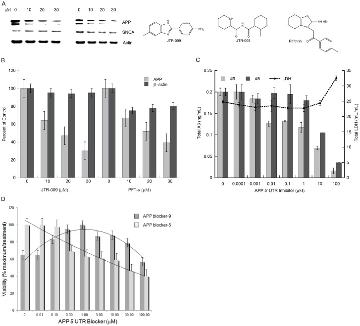 The effect of JTR-009 to reduce the steady state levels of APP in SH-SY5Y cells with a high degree of selectivity in the absence of changes to the levels of β-actin and α-synuclein ( SNCA ). Panels A and B : Dose-responsive (0, 10 µM, 20 µM, 30 µM) treatment of SH-SY5Y cells for 48 h to measure the capacity of JTR-009 and PFT-α to limit APP expression relative to β-actin and SNCA levels. The representative western blot experiment in Panel A contributed to densitometry for the histogram shown in Panel B (N = 3). Right Panel: Chemical structure of JTR-009, 4-(5-methyl-1H-benzimidazol-2yl) aniline, compared to the anti-apoptotic stroke agent PFTα, (275 Da), a tricyclic benzothiazole. Panel C : Dose-responsive measurement of total amyloid Aβ levels in response to the APP 5′UTR inhibitors JTR-005 and JTR-009, measured by benchmarked ELISA in conditioned medium of 72-hour treated SH-SY5Y cells. Shown are the mean values for the reduction of levels of Aβ ± SEM (N = 4) after treatment of the cells with JTR-009 and JTR-005 at 0.01 µM (* = p