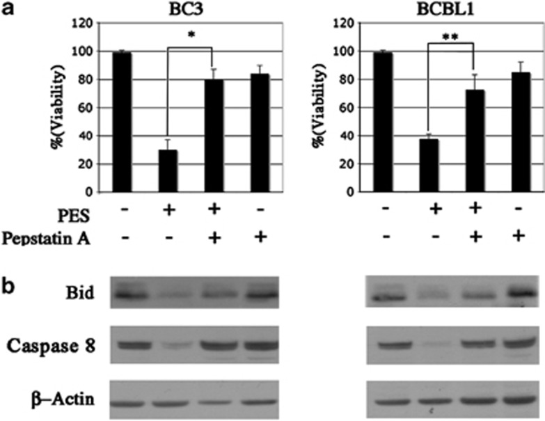 PES-induced cell death, BID processing and caspase 8 cleavage are reduced by pepstatin A. ( a ) BC3 and BCBL1 mock-treated or treated with PES (20 μ M for 24 h) in the presence or absence of <t>pepstatin</t> A (20 μ M). Cells were counted by trypan-blue exclusion and the mean±S.D. is reported * P -value=0.02, ** P -value=0.02. ( b ) Western blot was also performed concomitantly with the treatments reported above to analyze the processing of Bid and caspase 8. β -Actin was used as loading control and a representative experiment out of three is shown