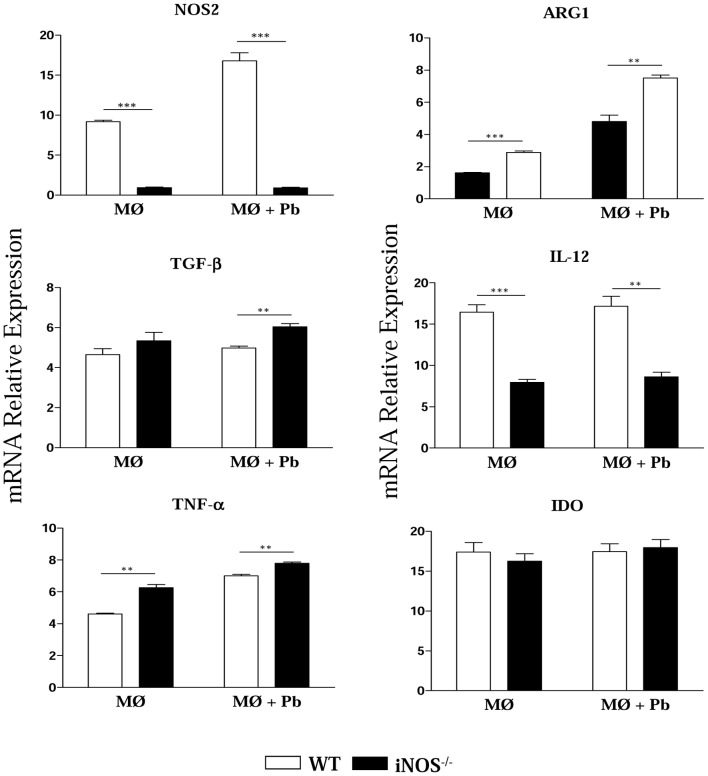 INOS −/− macrophages express high levels of TGF-β arginase1 and TNF-α. Uninfected and P. brasiliensis infected macrophages were used to characterize the expression of iNOS, ARG1, TGF-β, IL-12, TNF-α and IDO mRNA by quantitative Real-Time PCR. Total RNA was extracted using Trizol reagent, reverse transcribed, and cDNA amplified. Real-time PCR was performed using TaqMan universal master mix. Amplified products were normalized to the amount of GAPDH products from macrophages. All analyzes were done with five wells per condition in three independent experiments. The bars depict means ± SEM ** ( P