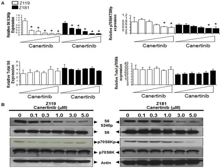 Downregulation of pro-survival signaling induced by canertinib. (A) Protein expression values from RPPA analyses of Z119 (white) and Z181 (black) cells were quantified, and expression relative to the mean graphed. Triangles indicate drug concentrations of 0–5 µM. *p