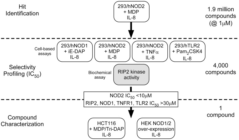 Cell-based screening scheme used to identify selective NOD2 inhibitors. The compound collection was screened for inhibitors of MDP-induced IL-8 secretion in 293/hNOD2 stable cells. Active inhibitors were then tested for selectivity against IL-8 induced by alternative pathways including NOD1, TNFR1 and TLR2 as well as for direct inhibitors of RIP2 kinase. The activity of selective NOD2 inhibitors was then confirmed in cells expressing NOD2 endogenously and against agonist-independent NOD2 signaling.