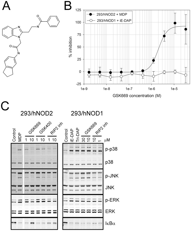 GSK669 inhibits NOD2 but not NOD1 mediated responses. (A) Structure of GSK669, the original hit identified from the NOD2 HTS screening cascade. (B) Concentration response curves showing GSK669 selectively inhibits MDP-stimulated IL-8. IL-8 secretion in either MDP treated 293/hNOD2 or iE-DAP treated 293/hNOD1 stable cell lines was measured in the presence of increasing concentrations of GSK669. Data are mean ± SD from 6 independent assays. (C) Selective inhibition of NOD2-mediated MAPK phosphorylation by GSK669. Serum-starved 293/hNOD1 or NOD2 stable cells were pre-incubated with compound at the concentrations indicated and then stimulated for 1 hour with either Tri-DAP or MDP, respectively. Phospho-p38, JNK and ERK1/2 were identified in cell lysates by western blotting. A RIP2 inhibitor compound was used as a positive control. Similar results were obtained in 5 (293/hNOD2) and 2 (293/hNOD1) separate experiments.
