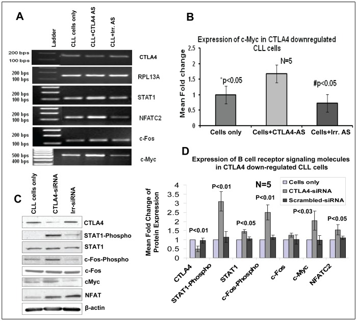 Upregulation of STAT1/phospho-STAT1, NFATC2, c-Fos/phospho-c-Fos, and c-Myc in CTLA4-downregulated CLL (low CD38/high CTLA4) cells as determined by RT-PCR, real-time PCR, and/or Western blotting. Panels A: Semi-quantitative RT-PCR showing that downregulation of CTLA4 by AS in CLL cells leads to up-regulation of STAT1, NFATC2, c-Fos, and c-Myc in CLL. Panel B: Real-time PCR results from four patient samples showing a significantly higher expression of c-Myc in CTLA4-downregulated CLL cells compared to control CLL cells or CLL cells treated with irrelevant AS. Panel C–D: Western blot results showing up-regulation and quantification of the expression of STAT1 and its phosphorylation, c-Fos and its phosphorylation, NFATC2, and c-Myc at the protein level in CTLA4 down-regulated CLL patient samples (n = 3). *p indicates the statistical difference between control CLL cells and CTLA4-downregulated CLL cells. β-Actin was used as a control.