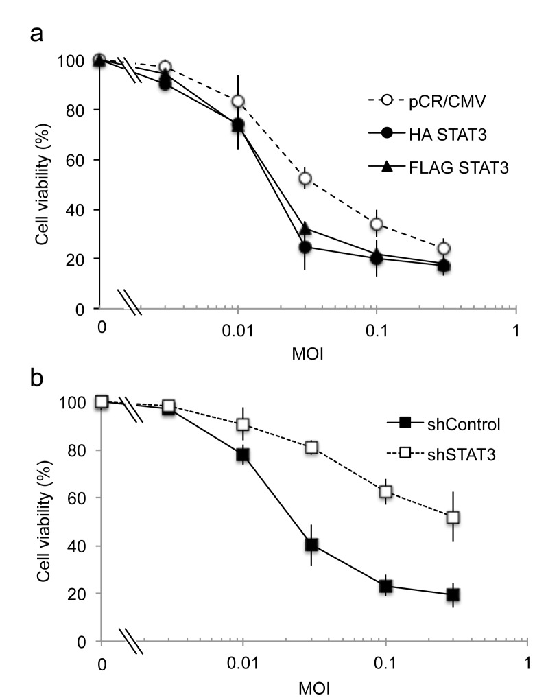 Cytotoxicity of oHSV against glioma cells with altered STAT3 gene expression. a; Control transfected cells (open circle) were compared to STAT3 over-expressing cells HA-STAT3 (closed circle) and FLAG-STAT3 (closed triangle). ED 50 of pCR/CMV, HA-STAT3, and FLAG-STAT3 were calculated to occur at MOI 0.04, 0.019, and 0.022, respectively. b; lentivirus control transfected cells (closed square) were compared with STAT3 knock down cells (open square). ED 50 of shControl and shSTAT3 were calculated to be at MOIs 0.025 and > 1.0, respectively. Cell viability (measured by MTT) of U251 glioma cells was assayed 3 days after infection of oHSV (rQNestin34.5) at different MOI. Data shown represents the mean ± SD of three replicates for each sample.