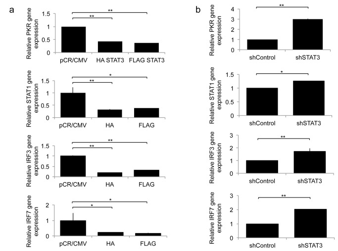 Expression of Type-I IFN responsive genes, PKR, STAT1, IRF3, and IRF7, 8 hours following oHSV (rQNestin34.5) infection (MOI 1.0) in A: U251 cells stably expressing HA-STAT3 or FLAG-STAT3 compared to control pCR/CMV and B: U251 cells stably expressing shSTAT3 RNAi or control. Each data point represents the mean of triplicate samples. Error bars indicate standard deviation. * P