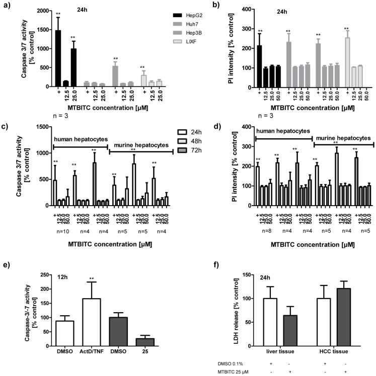 MTBITC selectively triggers apoptosis in liver tumor cells. Impact of MTBITC on apoptosis (a, c, and e) or necrosis (b, d and f) induction in malignant and healthy cells. Distinct apoptosis induction was assessed using caspase 3/7 activity after cell treatment with MTBITC for 12 to 72 h. Positive control (+): 10 µM CPT or staurosporine (a, c), 1 µg/ml actinomycin D/100 ng/ml TNF (ActD/TNF) (e). Necrosis induction was quantified using specific uptake of PI in isolated cells (b and d) or LDH release from PCLS (f). Positive control (+): 0.2% triton X-100. Results were expressed relative to the solvent (0.1% DMSO). Bars are mean+SD, (number of independent experiments is given below the figures; experiments conducted on PCLS were conducted in triplicate.).