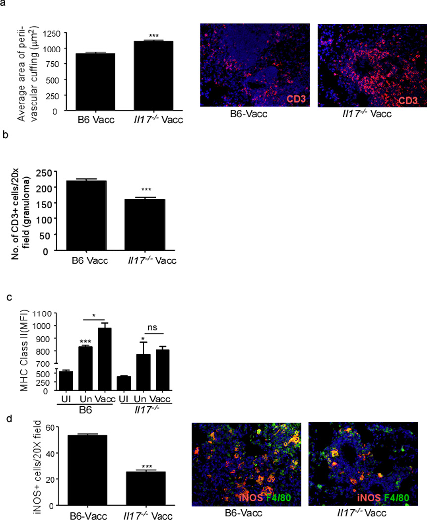 Absence of IL-17 results in impaired lung macrophage activation during vaccine-induced immunity B6, and Il17 −/− were mucosally vaccinated with ESAT6 1–20 in combination with LT-IIb, rested, challenged with Mtb as described in Figure 1 . Formalin-fixed, paraffin embedded lung sections from day 30 Mtb -challenged lungs were analyzed by immunofluorescence for T cell perivascular cuffing (CD3 + ) and quantified using the morphometric tool of the Zeiss Axioplan microscope and a representative image of typical T cell perivascular cuffing shown (a). The number of CD3+ T cells within the granuloma were quantitated as described under method (b). The mean fluorescent intensity (MFI) of MHC Class II I-A b expression on lung macrophages was determined by flow cytometry on day 15 from mucosally vaccinated Mtb -infected mice (Vacc), unvaccinated Mtb -infected mice (Un) or uninfected mice (UI) (c). The number of F4/80 macrophages producing iNOS were enumerated on day 30 post infection in formalin fixed lungs by immunofluorescence and a representative picture shown (d). The data points represent the mean (±SD) of values from 4–6 mice (a–d). *, p ≤0.05, ***p≤0.0005. One experiment representative of two is shown. ns-not significant.