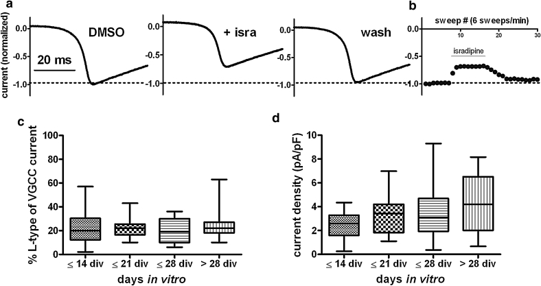 Levels of LTCC-mediated calcium currents in primary hippocampal neurons. a LTCC-mediated current components in total voltage-gated calcium currents were determined by applying ramp depolarizations (0.5 mV/ms) from −80 mV (=holding potential) to +50 mV and measurement of calcium current reduction upon a 90-s administration of 3 μM isradipine. The three traces depict the peak currents evoked under control conditions (DMSO), 3 μM isradipine and after washout of the dihydropyridine. b The reversible reduction was monitored by reading the peak of currents that were elicited every 10 s (e.g., sweeps 8–16 in the experiment shown). c Percentage of isradipine inhibited current with respect to total voltage-activated currents calculated from measurements as shown in a , b . Neurons were grouped according to the age of the cultures, as indicated on the x- axes. Neurons that had been kept in culture for at least 10 days but not longer than 2 weeks were allocated to the ≤14 days in vitro (DIV) group ( n = 16), neurons that had been maintained in culture for more than 4 weeks and maximally up to 5 weeks were allocated to the > 28 DIV group ( n = 19). n for the ≤21 DIV and ≤28 DIV was 17 and 15, respectively. Considerably variation of LTCC current density exists in all age groups, yet statistically groups do not significantly differ from each other. d Same data as in c. LTCC current density (pA/pF) was determined by relating of the dihydropyridine-sensitive current component to cell capacitance as a measure of cell surface. To highlight the intrinsic variation, data in c and d are shown as box-plots with min to max whiskers