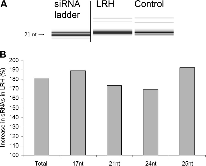 Small RNAs (sRNAs) concentration in total RNA in the control and low relative humidity (LRH) treatment. (A) Fragment of a bioanalyser gel image for small RNAs in equalized total RNA in an example control and an example LRH sample, showing the increase under LRH in the 19–25 nt range. The ladder (double-stranded sRNAs) is from the same gel; the vertical line indicates lanes not shown. (B) The percentage increase in [sRNAs] under LRH compared with the control within RNA size class (data are means for n =6).
