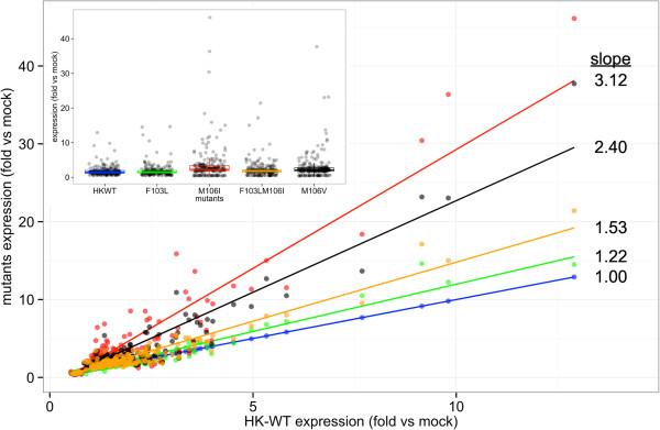 Linear plot of relative gene expression of host genes between NS1 HK - wt and mutants in human A459 cells. The host gene expression relative to HK-wt was plotted with the line of best fit for dysregulated genes in human A459 cells shown in Figure 7 a. The slope of each line is indicated relative to the HK-wt line with slope = 1. Insert. A box plot of dysregulated gens from Figure 7 a shown relative to the gene expression of HK-wt relative to mock infected M1 cells.