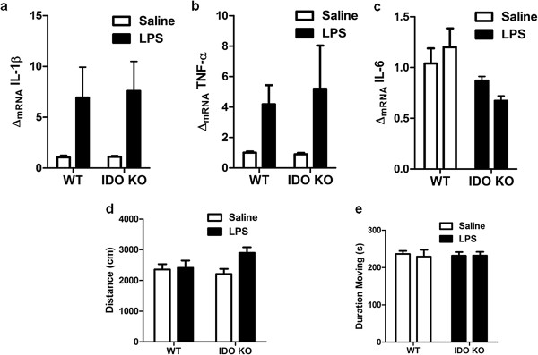 Brain mRNA expression of proinflammatory cytokines, but not sickness behavior, is increased by intracerebroventricular lipopolysaccharide. Both wild-type (WT) and indoleamine-2,3-dioxygenase (IDO1) knockout (KO) mice exhibit increased steady-state mRNA expression of ( a ) IL-1β and ( b ) TNFα, but not of ( c ) <t>IL-6</t> in the whole brain 24 hours post intracerebroventricular (ICV) lipopolysaccharide (LPS, 10 ng). Exploratory locomotor activity measured by ( d ) distance traveled or ( e ) duration of time during the test spent moving were not different 24 hours after ICV LPS. Data are average ± standard error of the mean. n = 4 to 5 mice per group.