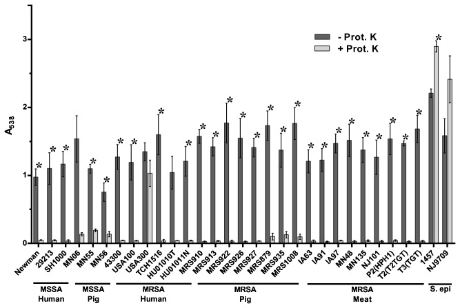 Inhibition of biofilm formation by Proteinase K. Strains tested are shown along the x-axis and grouped based on methicillin-sensitivity and isolation source. The indicated strains were grown statically for 24 hours in media alone (- Prot. K) or in media supplemented with 100 µg/ml Proteinase K (+ Prot. K). Biofilm formation was quantified by standard microtiter assays and measuring the absorbance at 538 nm, plotted along the y-axis. Bars represent the average absorbance obtained from at least 3 independent plates representing biological replicates; error bars represent the SEM. Asterisks (*) denote a p -value less than 0.05 between the treated and untreated groups.