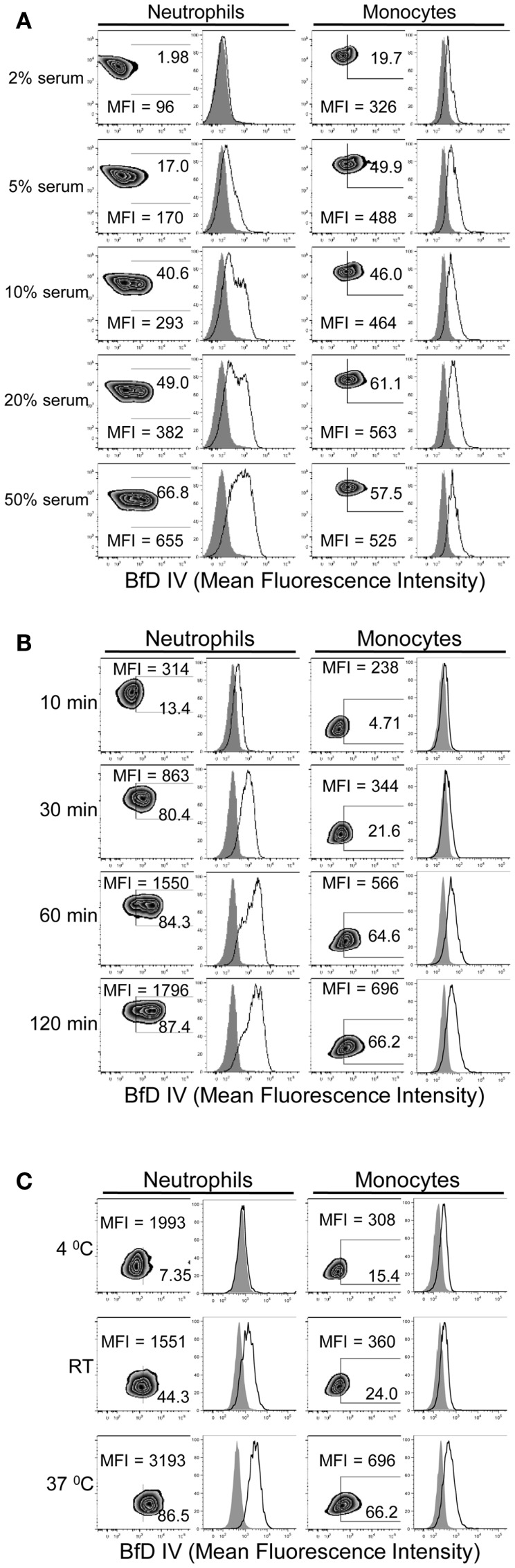 Time, temperature, and serum-dependent binding of PGG β-glucan to human neutrophils and monocytes . PGG β-glucan binding to human neutrophils and monocytes was determined (A) in the presence of 2, 5, 10, 20, and 50% of serum, (B) at 10, 30, 60, and 120 min, and (C) at RT, 4 and 37°C. The MFI and percentage of BfD IV positive cells were indicated in the zebra plots, and histogram shows PGG β-glucan binding (solid) in comparison to the vehicle-control (gray filled). Data shown in each of the conditions are representative of three independent experiments performed with cells obtained from three different donors.