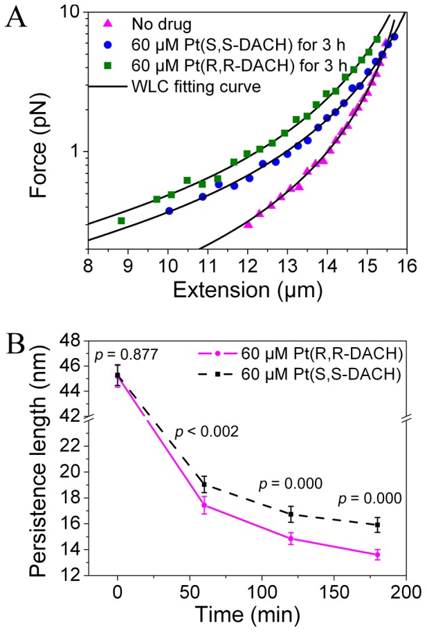 Force-extension curves and persistence length as a function of incubation time. (A) The force-extension curves of λ-DNA without drug ( L = 16.5±0.04 µm, P = 44.0±2.1 nm), with 60 µM Pt(S,S-DACH) incubated for 3 h ( L = 17.3±0.08 µm, P = 16.5±1.0 nm ) and 60 µM Pt(R,R-DACH) incubated for 3 h ( L = 17.1±0.09 µm, P = 12.9±0.7 nm ). The data were fitted by the WLC model (Eq. 1). (B) The persistence lengths of λ-DNA treated with 60 µM Pt(R,R-DACH) or Pt(S,S-DACH) for different incubation times. Each data point was the mean of twenty independent measurements. The error bars corresponded to 95% confidence intervals. The difference was considered statistically significant when the p value of two-sample t-test was less than 0.05.