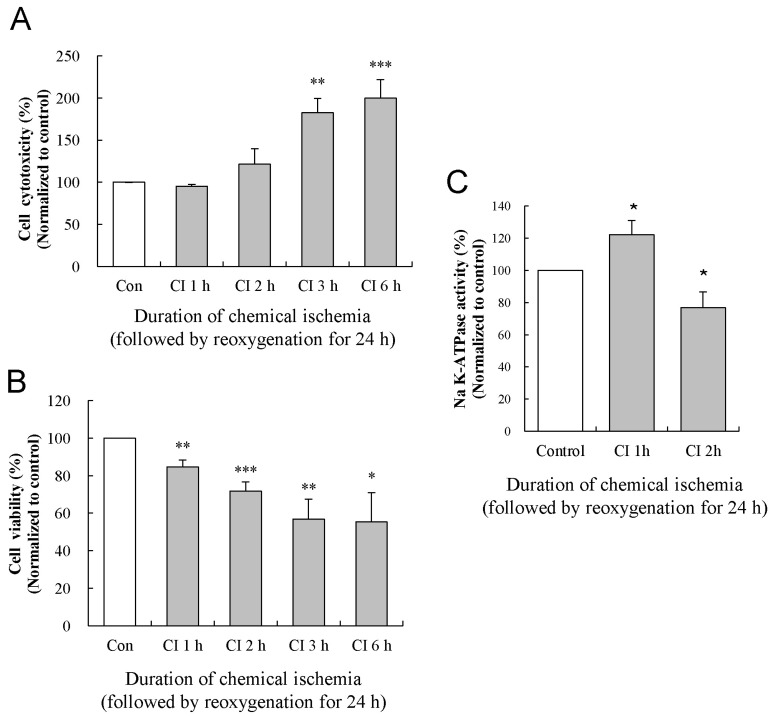 Effects of reoxygenation on the changes in the cytotoxicity, viability, and activity of the Na-K ATPase. The levels of LDH release (A) and MTT reduction (B) were quantified at 24 h of reoxygenation following chemical ischemia for 1, 2, 3, and 6 h. (C) Activity of Na-K ATPase was measured at 24 h of reoxygenation following chemical ischemia for 1 and 2 h. Data show the mean± S.E.M. of the relative values obtained from five animals. * p