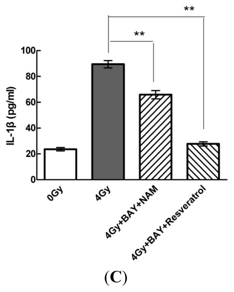 Sirt1 inhibits IL-1β expression via the NF-κb pathway in MSCs. ( A – C ) Cells were pre-treated with BAY (5 μM) and either resveratrol (200 μM) or NAM (20 mM) for 1 h prior to stimulation with radiation (4 Gy). Extracellular and intracellular protein and mRNA levels of IL-1β were determined by ELISA, Western blot, and quantitative real-time PCR analyses, respectively. Values are presented as the mean ± SD ( n = 3). * p
