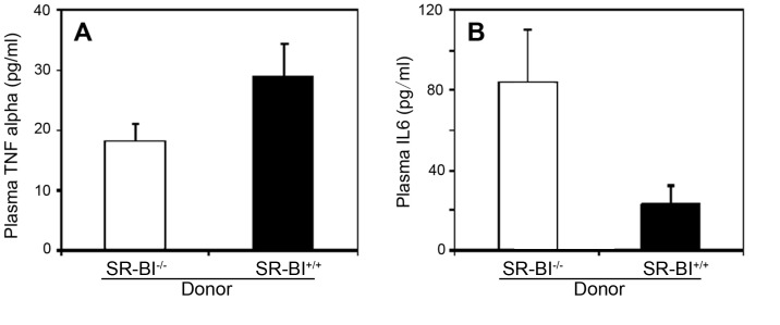 Effects of restoring SR-BI expression in BM derived cells on plasma levels of TNFα and IL-6 in HFCC diet fed SR-BI-null/apoE-hypomorphic mice. A. TNFα and B. IL-6 levels in plasma from control SR-BI −/− → SR-BI −/− (white bars) and SR-BI +/+ → SR-BI −/− mice (black bars) after 3 weeks of HFCC diet feeding. Shown are mean levels for n = 8 mice per group. Error bars correspond to standard errors. A. TNFα levels were not statistically significantly different. B. IL-6 levels were statistically significantly different. P = 0.028. Statistical analysis was by the Mann-Whitney rank sum test.