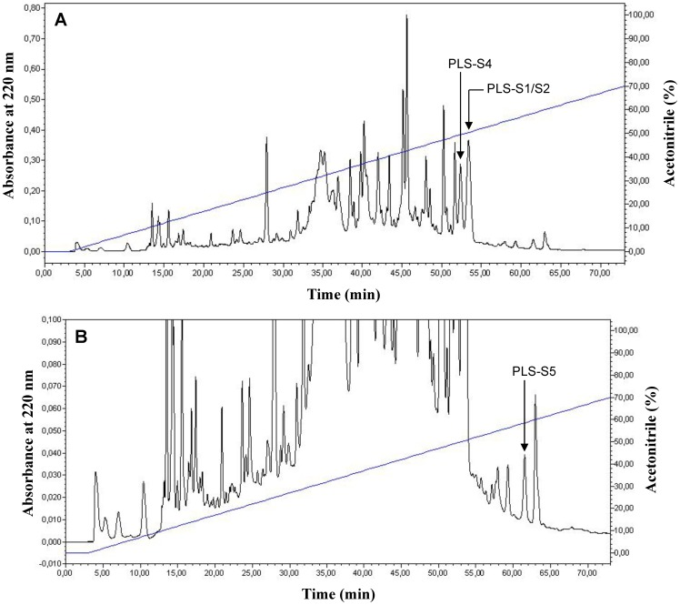 Reversed-phase HPLC chromatogram of P. sauvagii skin extract prepurified on a sep-pak C18 cartridge (A, full scale; B, zoom). The sample was injected on a semi-preparative Nucleosil C18 column eluted at 4 mL/min with a 0–70% linear gradient of acetonitrile in 0.1% TFA/water (1% ACN/min). Fractions of 4 mL were collected, lyophilized, and analyzed. The position of the mature PLSs is indicated by an arrow (PLS-S3 and PLS-S6 were not detected). The identification of PLSs was achieved by MALDI-TOF-MS and MS/MS (Supporting information, Fig. S1 A–C and S2 A–C ).