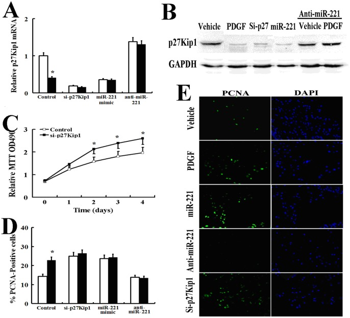 PDGF-mediated inhibition of p27Kip1 by miR-221 Promotes Cell proliferation. (A, B): AsPC-1 cells were transfected with a negative control mimic, the miR-221 mimic, antisense oligonucleotides to miR-221 (anti-mIR-221) or p27Kip1 siRNA. The cells were then treated with PDGF-BB (20 ng/ml) for 24 h and subjected to qRT-PCR (A) and Western blot analysis (B) for p27Kip1. (C): AsPC-1 cells were transfected with negative control or p27Kip1 siRNA and subjected to the MTT cell proliferation assay (The results are indicated as the absorbance readings at 490 nm). (C) (D, E): AsPC-1 cells were transfected with a negative control mimic, the miR-221 mimic, antisense oligonucleotides to miR-221 (anti-mIR-221) or p27Kip1 siRNA. The cells were then treated with PDGF-BB (20 ng/ml) for 24 h and subjected to staining with a <t>FITC-conjugated</t> antibody against the proliferation marker <t>PCNA</t> and DAPI (E). In total, 150 cells were counted per condition, and the percentage of PCNA-positive cells is presented (D). All experiments in this figure were carried out in triplicate, and the results are displayed as the means ± SD.