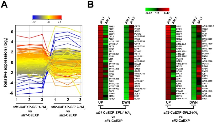 Sfl1p and Sfl2p transcriptomics. ( A ) GeneSpring expression profile plots of each of the three biological replicates from the sfl1 -CaEXP- SFL1-HA 3 versus sfl1 -CaEXP ( sfl1 -CaEXP- SFL1-HA 3 vs. sfl1 -CaEXP) and the sfl2 -CaEXP- SFL2-HA 3 versus sfl2 -CaEXP ( sfl2 -CaEXP- SFL2-HA 3 vs. sfl2 -CaEXP) transcriptomics data. The log 2 -transformed relative expression level of each gene from averaged signal intensities of two nonoverlapping gene-specific microarray probes (See Materials and Methods for details), is shown on the y -axis and the corresponding biological replicate sample for each condition (1, 2 and 3) is shown on the x -axis. The profile plot is coloured according to the ratio observed for replicate 1 in the sfl1 -CaEXP- SFL1-HA 3 vs. sfl1 -CaEXP condition. ( B ) Heat maps of the 30 highest log 2 -transformed relative gene expression levels in the sfl1 -CaEXP- SFL1-HA 3 versus sfl1 -CaEXP ( sfl1 -CaEXP- SFL1-HA 3 vs sfl1 -CaEXP, left panels, UP and DWN) and the sfl2 -CaEXP- SFL2-HA 3 versus sfl2 -CaEXP ( sfl2 -CaEXP- SFL2-HA 3 vs sfl2 -CaEXP, right panels, UP and DWN) transcriptomics data (combination of the 3 biological replicates in each condition). The most upregulated (UP, descending signal intensity) or downregulated (DWN, ascending signal intensity) genes in sfl1 -CaEXP- SFL1-HA 3 vs. sfl1 -CaEXP (left panels, SFL1 column) or sfl2 -CaEXP- SFL2-HA 3 vs. sfl2 -CaEXP ( SFL2 , right panels) transcriptomics data and their matching probe intensities from the sfl2 -CaEXP- SFL2-HA 3 vs. sfl2 -CaEXP condition (left panels, SFL2 column) or the sfl1 -CaEXP- SFL1-HA 3 vs. sfl1 -CaEXP (right panels, SFL1 column), respectively, are indicated with their corresponding name or orf19 nomenclature. Heat maps were constructed using Genesis version 1.7.6 [83] .