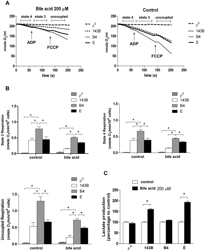Effects of bile acid on OXPHOS and glycolysis in cybrid <t>B4,</t> cybrid E, parental 143B and ρ 0 cell. Cybrid B4, cybrid E, parental 143B and ρ 0 were treated with <t>PBS</t> or 200 µM bile acid (BA) for 24 h. (A) Measuring respiratory function, oxygen content in medium is illustrated by polarographic curves. Arrows indicated the point of adding drugs. Mitochondrial state 4 respiration was determined using 10 mM glutamate/malate as substrate. State 3 and uncoupled respiration were determined in the presence of 0.2 mM ADP and 1 µM FCCP respectively. 5×10 6 cells/mL were resuspended in 100 µl respiratory medium. (B) Histogram showing the resulting oxygen consumption rate. (C) Culture medium was collected to detect the production of lactate, which was normalized to cell number. The results represented were mean ± SE in six times tests * P