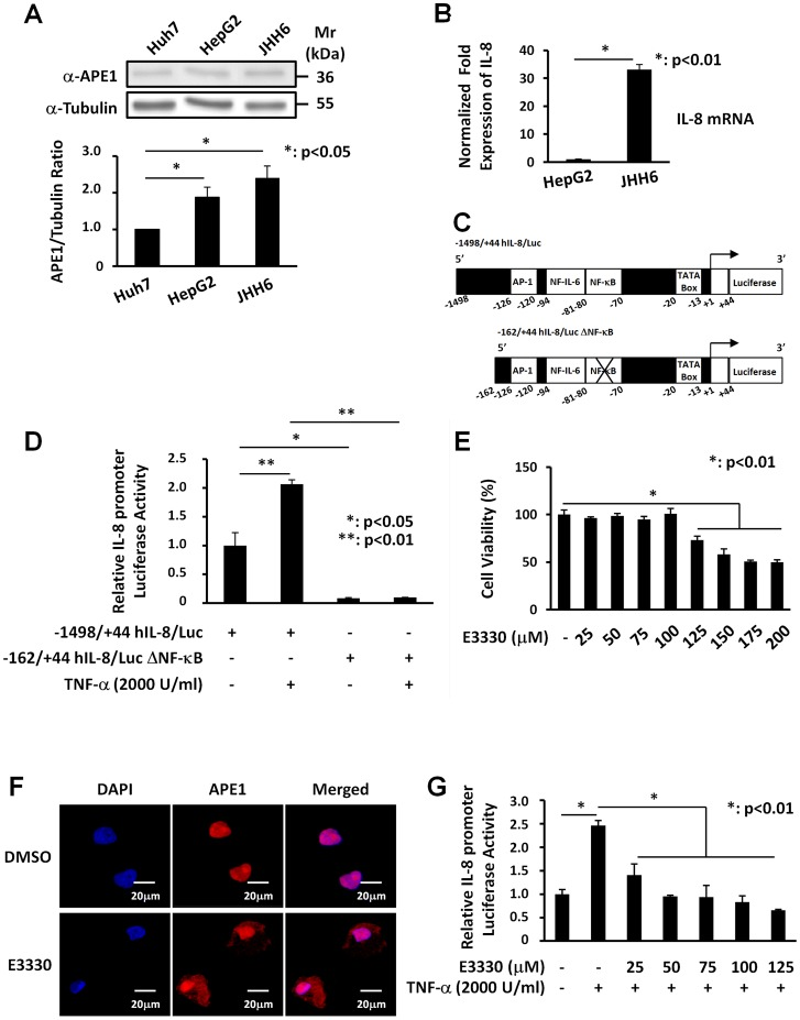 NF-κB transcription factor regulates IL-8 promoter activity in JHH6 cells and E3330 treatment inhibits TNF-α-induced promoter activation. Panel A: Western Blotting analysis of total cell extracts from human hepatocellular carcinoma cell lines. A representative Western blot analysis for the evaluation of APE1 expression in Huh-7, HepG2 and JHH6 cell lines is shown in the upper panel. β-Tubulin was always measured as loading control and was used for data normalization. The lower panel shows expression levels of the protein obtained after densitometric analysis of the bands. An almost two-fold increase was observed in the content of APE1/Ref-1 in JHH6 cell line compared to Huh-7. Values were reported as histograms of the ratio between APE/Ref-1 band intensities and β-Tubulin. Data are the means ± SD of three independent experiments. Panel B: IL-8 mRNA expression in human hepatocellular carcinoma cell lines. IL-8 mRNA levels were evaluated on HepG2 and JHH6 cell lines by Real-Time PCR. Total RNA was extracted and reverse-transcribed as described in Material and Methods section. The histograms show the detected levels of IL-8 mRNA normalized to two different housekeeping genes (18S and GAPDH). An almost thirty-fold increase was observed for the mRNA IL-8 expression in JHH6 cell line. Data are the means ± SD of three independent experiments. Panel C: Schematic representation of the luciferase-linked human IL-8 promoter constructs used in this study. The plasmids −1498/+44 hIL-8/Luc and −162/+44 hIL-8/Luc (deleted of a 5′ promoter region) contain binding sites for AP-1, NF-IL-6 and NF-κB transcription factors. Site-directed mutation of the IL-8 NF-κB binding site in the context of the −162/+44 hIL-8/Luc plasmid abolished the binding of NF-κB on IL-8 promoter. Panel D: Effect of site-directed mutagenesis of the NF-κB binding site in the human IL-8 promoter sequence. JHH6 cells transfected with −1498/+44 hIL-8/Luc or −162/+44 hIL-8/Luc ΔNF-κB constructs and then treated with