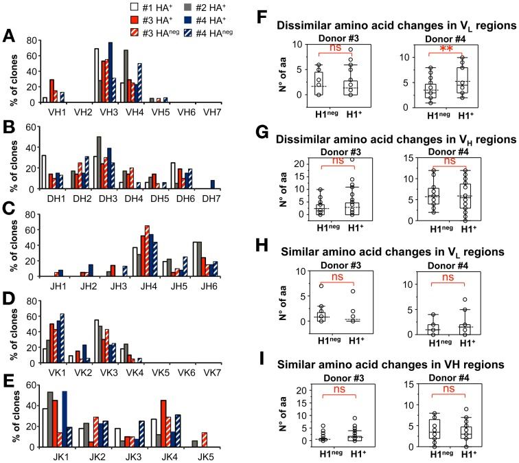 Molecular cloning of HA + B lymphocytes. PBMCs from 4 anonymous blood bank donors were stained as in Figure 4B . Single H1 + , H3 + , or H1 neg H3 neg CD20 + B-cells were sorted to perform molecular cloning and analysis of their paired V H V L Ig regions as described in Material and Methods section. A–E. Distribution of V H (A), D H (B), J H (C), V k (D) and J k (E) gene use across arrays of B-cells sorted from each donor (16 and 18 HA + clones from donors #1 and #2; 35 HA + and 20 HA neg clones from donor 3; 16 HA + and 16 HA neg clones from donor #4. F–I. Number of mutations in H1 + and H1 neg CD20 + B-cells from donors #3 and #4, which cause dissimilar (F, H) or similar (G, I) amino acid substitutions in V H (G,I) and V L (F,H). NS and ** indicate not significant, or significant (p