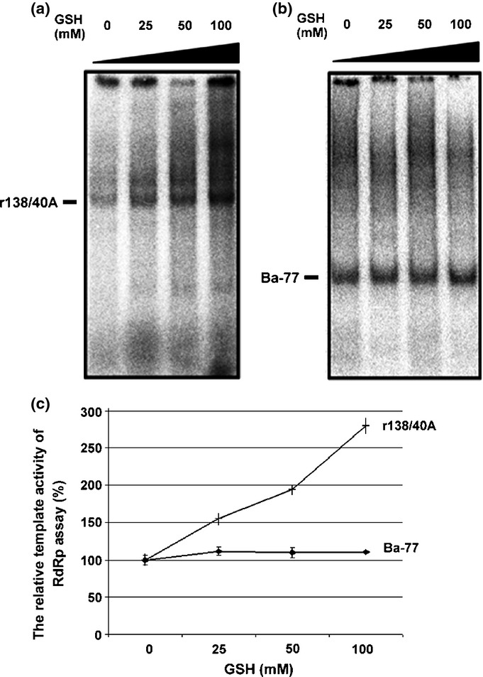 In vitro RdRp assay with exogenous RNA templates. Approximately 50 ng of RNA template r138/40A (the 3′ UTR of Bamboo mosaic virus (BaMV)) in (a) and Ba-77 (the 3′-end 77 nts of BaMV minus-strand) in (b) were incubated with BaMV RdRp complex for the in vitro RNA synthesis in the presence of different concentrations (0–100 mM) of glutathione (GSH) as indicated. The RdRp products labeled with [α- 32 P] <t>UTP</t> as indicated bands were separated on a 5% acrylamide gel and quantified by a phosphorimager. (c) The relative RdRp template activities were plotted according to the data derived from (a) and (b). The banding density of the in vitro RdRp assay with either r138/40A or Ba-77 was set as 100% in the absence of GSH (0 mM). Each spot on the plot was the average ± SE of at least three independent experiments.