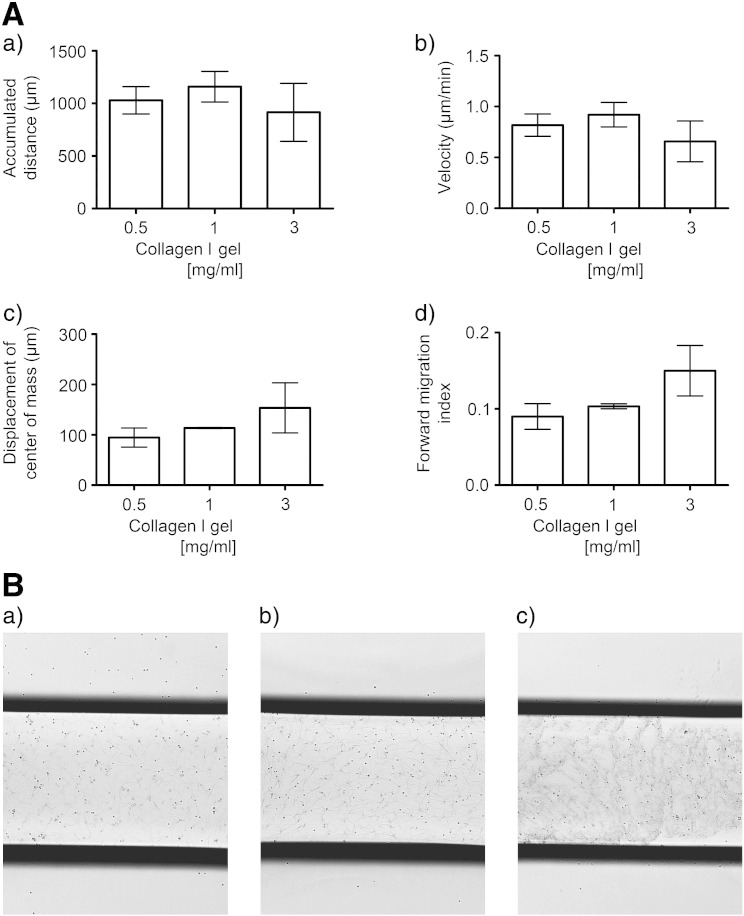 The effects of collagen I gel concentrations on CD133 + cell migration in the 3D μ-slide assay. (A) After 24 hour culture of human UCB CD133 + cells in <t>StemSpan</t> medium and SCF, Flt-3 ligand, IL-6 and TPO, cells were suspended in 0.5 mg/ml, 1 mg/ml or 3 mg/ml collagen I gel solutions and seeded into the central chamber of the 3D chemotaxis μ-slides. A chemokine gradient was established using 1 μg/ml CXCL12. The cells were imaged over 22 h by timelapse microscopy migration and analyzed using Image J manual tracking software and the chemotaxis and migration tool plug in for (a) accumulated distance, (b) velocity, (c) displacement of the center of mass and (d) forward migration index. Values are means ± SEM (n ≥ 3independent experiments). Variability amongst independent experiments was increased when 3 mg/ml collagen I gels were compared with 0.5 or 1 mg/ml collagen I gels. This is exemplified when comparing 1 mg/ml and 3 mg/ml collagen I gels respectively for the ranges in the accumulated distance (1012 μm to 1451 μm vs. 350 μm to 1467 μm respectively), velocity (0.77 to 1.16 vs. 0.27 to 1.18 μm/min respectively), displacement of center of mass (111.80 to 115.43 vs. 26.94 to 256.20 μm respectively) and forward migration index (0.100 to 0.110 vs. 0.060 to 0.220 respectively). (B) Microscopic images (× 4 magnification) of CD133 + cells in (a) 0.5 mg/ml, (b) 1 mg/ml and (c) 3 mg/ml collagen 1 gels after seeding into the central chamber of the 3D chemotaxis μ-slide and demonstrating the lack of uniformity of collagen I fibers with 3 mg/ml collagen I gels.