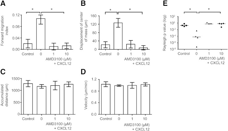 AMD3100 inhibits chemotaxis but not chemokinesis. Human UCB CD133 + cells were cultured in StemSpan medium with SCF, Flt-3 ligand, IL-6 and TPO for 24 h, encapsulated in 1 mg/ml collagen I gel and seeded into the central chamber of the 3D chemotaxis μ-slides, prior to adding 1 μg/ml CXCL12 to form a chemokine gradient with or without AMD3100. Histograms Illustrate the effect of adding 0, 1 μM or 10 μM AMD3100 with 1 μg/ml CXCL12 for the chemotactic or chemokinetic responses of forward migration index (A) and displacement of the center of mass (B) or velocity (C) and accumulated distance (D). Controls contained media alone. Values are means ± SEM for n ≥ 3 independent experiments. Notably, with the addition of AMD3100, there was a significant decrease in the Rayleigh test p values (E), in displacement of the center of mass (mean ± SEM values of 126.5 μm ± 21.1 for no AMD3100 to 24.7 μm ± 18.1 for 1 μM AMD3100 and 7.5 μm ± 10.6 for 10 μM AMD3100) and in forward migration index (mean ± SEM values of 0.11 ± 0.02 with no AMD3100 and 0.01 ± 0.01 for 1 μM AMD3100 and 0.01 ± 0.01 for 10 μM AMD3100) towards CXCL12 compared to absent AMD3100 (p