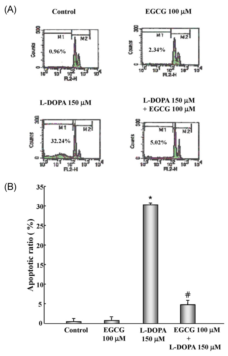 Flow cytometric histograms of PC 12 cells after exposure to 150 µM L-DOPA alone for 24 h or preincubated with 100 µM EGCG for 30 min before treatment with L-DOPA. (A) After incubation, cells were harvested and stained with propidium iodide. Relative DNA content was analyzed by flow cytometry. The X -axis represents DNA content and the Y -axis represents the number of cells. (B) The results shown in present the mean ± SEM of six experiments. * P