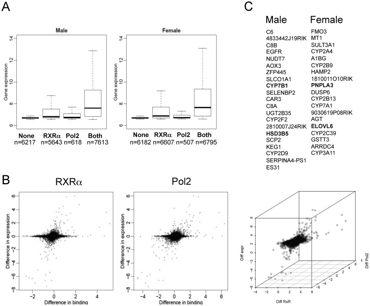 Correlation of gender differential <t>RXRα,</t> Pol2 and RNA expression levels. A) Correlation of RXRα and Pol2 binding with gene expression levels. B) Scatterplot representation of gender differential RXRα binding with gender differential gene expression on the left-hand side, and scatterplot representation of gender differential Pol2 binding with gender differential gene expression on the right-hand side. C) Genes with a gender specific positive correlation between RXRα binding Pol2 binding and changes in RNA levels (see also Fig. S4A–B and Table S6A–H in File S1 ).