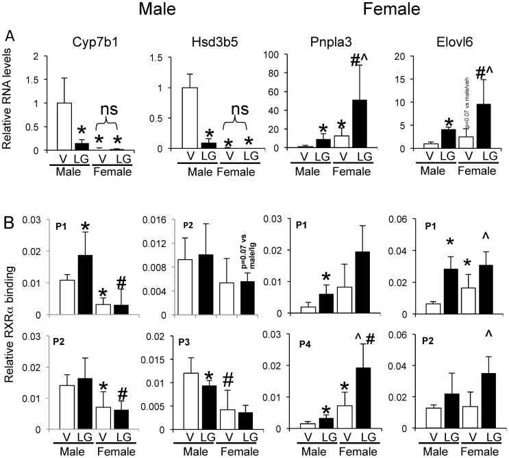 Gender differential responsiveness to RXRα activation in vivo. Male and female mice were gavaged once daily for 5 days with the RXRα ligand LG268. A) Relative RNA levels in male and female mouse liver as determined by QPCR in response to RXRα activation by LG268 for selected male and female enriched genes. B) RXRα occupancy in response to RXRα activation on selected male and female enriched genes (see also Fig. S5 and S6 ). *p