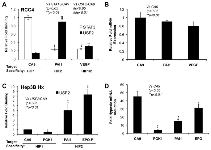 STAT3 and USF2 are enriched on the promoters of HIF1 or HIF2 targets respectively. Chromatin immunoprecipitation was performed in chromatin lysates from normoxic RCC4 ( A ) or hypoxic Hep3B cells ( C ). Antibodies against STAT3 or USF2 were used to co-precipitate STAT3- and USF2-associated genomic DNA. Q-PCR was used to detect the promoters of HIF1 target genes, CA9 and PGK1 , the enhancer or promoter of HIF2 target genes, EPO and PAI1 , or the HIF1/HIF2 common target, VEGF . Results were normalized to input samples as % of input. The relative fold binding was calculated by dividing each of the % input values by the % input value of STAT3 associated with CA9 promoter here in Figure 3A. Similar calculations were made for Figure 3C and ChIP/Re-ChIP in Figure 9. B ) The relative expression levels of CA9 , PAI1 and VEGF mRNAs in normoxic RCC4 cells. D ) The fold of induction of HIF1 target genes CA9 and PGK1 , HIF2 target genes PAI1 and EPO in hypoxic Hep3B cells.