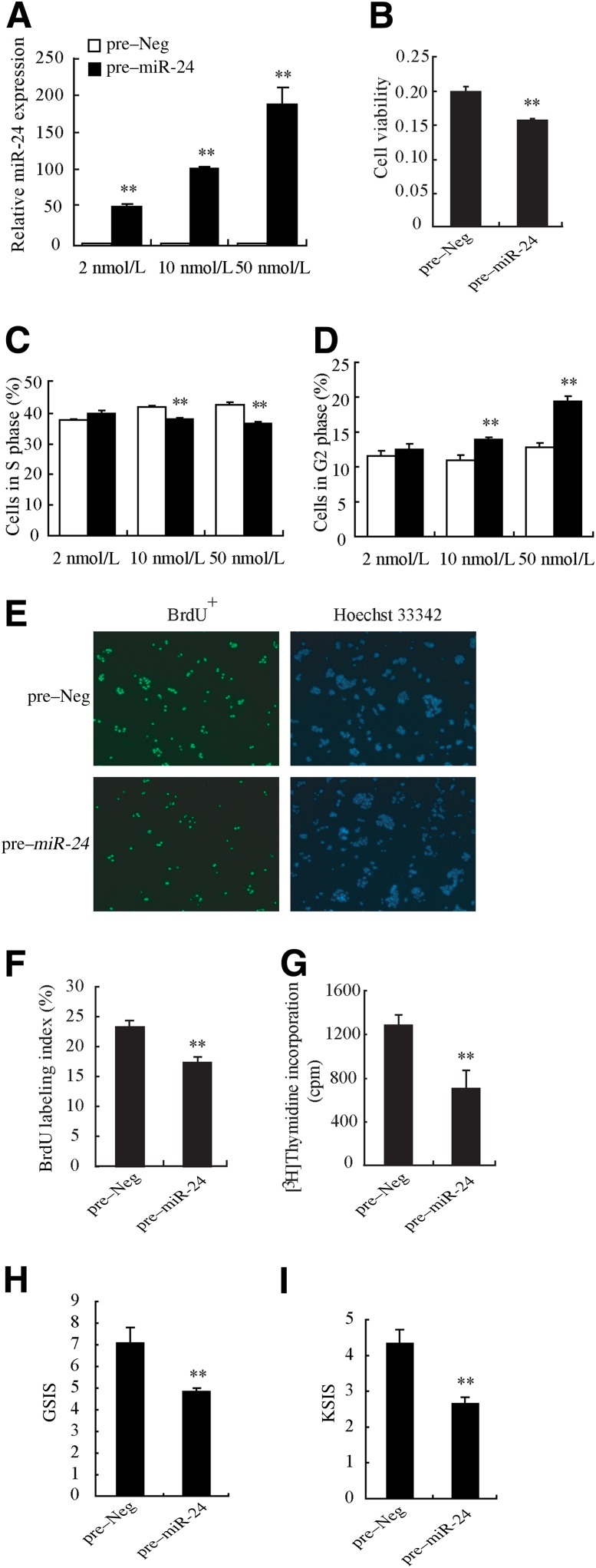 Elevated miR-24 reduces cell viability and impairs β-cell function. A : Pre–miR-24 mimetics or pre-Neg at different concentrations (2, 10, or 50 nmol/L) were transfected into MIN6 cells for 48 h, when TaqMan qRT-PCR was carried out. Transfection caused an effective increase in miR-24 abundance in MIN6 cells. B : Overexpression of miR-24 for 48 h caused a decrease of cell viability in MIN6 cells, measured by the WST-1 assay. Transfection of 10 nmol/L miR-24 led to a decrease of cell number in the S phase ( C ) and to an increase in the G2 phase ( D ). The same results were detected with transfection of miR-24 at 50 nmol/L but not at 2 nmol/L, which was insufficient to induce cell cycle arrest. E and F : BrdU labeling was used to confirm the reduced DNA synthesis accompanying the elevation of miR-24 . E : Representative images show BrdU and Hoechst stained cells, and at least 800 cells were counted. F : The BrdU labeling index is defined as the ratio of the number of BrdU + nuclei to the total number of nuclei within the fields. G : Decreased cell proliferation was also detected in primary islets isolated from ICR mice. GSIS and KSIS assays were performed on MIN6 cells overexpressing miR-24 for 48 h, and the GSIS index ( H ) and KSIS index ( I ) were calculated. The results were similar to those in palmitate-treated cells. ** P