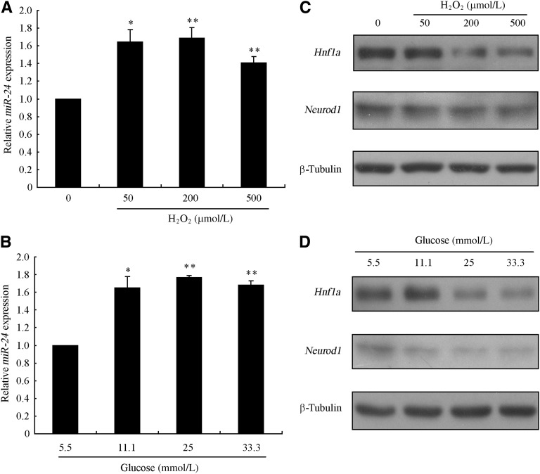 Oxidative stress induced miR-24 expression. MIN6 cells were precultured in DMEM with 5.5 mmol/L glucose for 24 h, and then cells were incubated with the indicated concentration of H 2 O 2 for an additional 24 h or with glucose for an additional 48 h. Relative expression of miR-24 induced by H 2 O 2 ( A ) or glucose ( B ) was analyzed by TaqMan qRT-PCR relative to corresponding controls. U6 detected by a TaqMan probe was used as an internal control. Values are the mean ± SEM of three individual experiments (* P