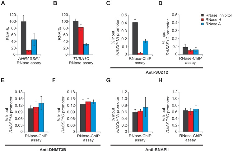 ANRASSF1 mediates recruitment of SUZ12 to the RASSF1A promoter. (A) RNase assay for detection of ANRASSF1 using RT-qPCR in permeabilized HeLa cells treated with RNase inhibitor (black bar), RNase H (red bar) or RNase A (blue bar). RNA% for each of the two RNase treatments was calculated relative to the corresponding values for the RNase inhibitor. These data show the means ± SD from three independent experiments. (B) As a control, alpha-tubulin mRNA was measured using RT-qPCR in parallel under the same conditions as described in (A). These data show the means ± SD from three independent experiments. (C) RNase-ChIP assay with anti-SUZ12 antibody in permeabilized HeLa cells treated with either RNase inhibitor (black bar), RNase H (red bar) or RNase A (blue bar). The amount of DNA at the RASSF1A promoter region detected through qPCR in anti-SUZ12 samples was calculated in relation to the input. These data show the means ± SD from two independent experiments that were performed in triplicate. (D) The amount of DNA at the RASSF1C promoter region was measured under the same conditions as described in (C). (E–F) The amount of DNA at the RASSF1A and RASSF1C promoter regions was measured under the same conditions as in (C–D), except that an anti-DNMT3B antibody was used. (G–H) The amount of DNA at the RASSF1A and RASSF1C promoter regions was measured under the same conditions as in (C–D), except that an anti-RNA Pol II antibody was used.