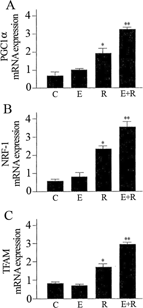 Effect of resveratrol and equol on mRNA expression of PGC1-α (A), NRF-1 (B), TFAM (C) in HUVEC. qRT-PCR measurement to assess the mRNA expression of the mitochondrial biogenesis factors. Representative data of at least 3 experiments each performed in triplicate. (*= P