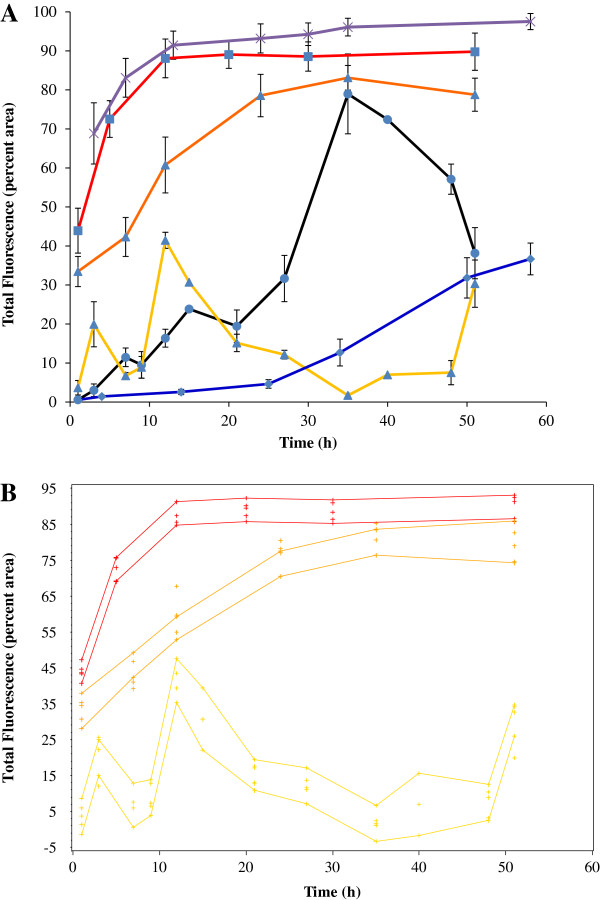Temporal expression of flhD, ompR, rcsB in AJW678 and flhD in the ompR and rcsB mutant strains. A. Fluorescence was quantified as percent area of the images that were fluorescent, averages and standard deviations were determined. The x-axis indicates the time (hours) of biofilm formation. The y-axis indicates the total fluorescence intensity in percent area for the different strains at the different time points. The yellow, black, and blue lines are showing the gene expression profile of BP1470 (AJW678 flhD :: gfp ), BP1432 (AJW678 ompR :: gfp ), and BP1462 (AJW678 rcsB :: gfp ), respectively. The red line is the temporal expression profile of BP1531 ( flhD :: gfp ompR :: Tn 10), the orange line that of BP1532 ( flhD :: gfp rcsB :: Tn5 ). The purple line is our housekeeping strain BP1437 which contains the aceK :: gfp fusion plasmid. B. Confidence bands were calculated using the loess procedure. Upper and lower lines of each colors are indicating the highest and the lowest level of the total fluorescence intensity. The color code is identical to A.