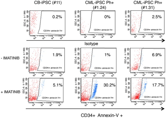 Partial restoration of TKI-sensitivity of CD34 + hematopoietic progenitors derived from CML-iPSCs. Partial restoration of sensitivity to TKI of CD34 + hematopoietic progenitors derived from CML-iPSCs. Apoptosis in untreated versus imatinib cultures (5 µM, 24 h) was evaluated after annexin-V staining by FACS analysis, in CD34 + cells derived from CB-iPSC #11, CML-iPSCs #1.24 and #1.31.