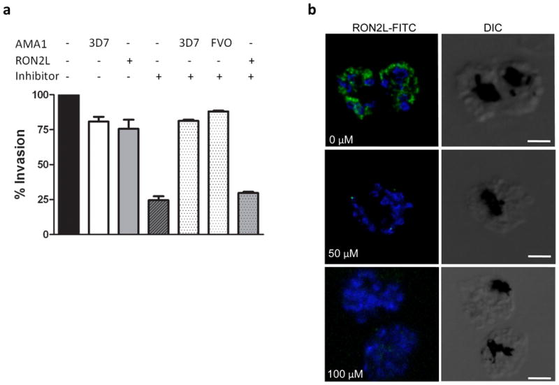 Mode of action of the inhibitor NCGC00262650 is mediated through binding of AMA1 The mode of inhibition of the small molecule was studied by a depletion assay using either his-tagged recombinant AMA1 or biotin-tagged RON2L peptide. The ability of AMA1 or RON2 to bind the inhibitor was assessed by performing invasion assays using inhibitor-depleted supernatants. 500 pmols of either recombinant AMA1 (both 3D7 and FVO allele) or RON2L peptide bound to magnetic beads was used to deplete 500 pmols of the inhibitor (final concentration 10μM). Error bars represent ± SEM from two experiments. (b) Immunofluorescence assay using FITC-labeled RON2L peptide. FITC-labeled RON2 peptide binds to AMA1 in the mature schizonts in the absence of inhibitors, while pre-incubation with inhibitor NCGC00015280 prevents binding of the peptide. Similar results were obtained with the analog NCGC00262650 and the inhibitor NCGC00181034 (data not shown). Scale bars represent 3 μm.