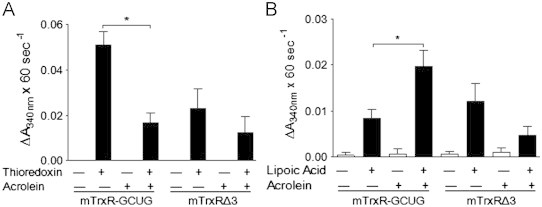 Effects of acrolein on enzymatic activity of mTrxR. Semisynthetic mTrxR-GCUG and mTrxRΔ3 (200 nM) were incubated with acrolein for 30 min, and thioredoxin reductase activity was assessed using the insulin assay (A), and NADPH oxidase activity was determined in the absence (white bars) or presence (black bars) of α-lipoic acid (B). Results expressed as the mean change in absorbance x 60 s −1 ±SEM, n =5. *: p