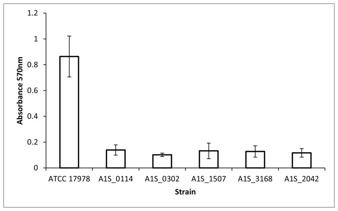 Quantification of biofilm formation by the wild-type strain (ATCC 17978) and strains with chromosomal disruptions in the genes A1S_0114, A1S_0302, A1S_1507, A1S_3168 and A1S_2042.